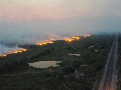 Incendios de grandes proporciones devoran parte de Pantanal brasileño
