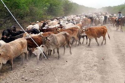 Advierten sobre animales sueltos en tramos ruteros