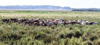 Ejecutivo y sector cárnico se alían para mejorar ingresos de pequeños productores
