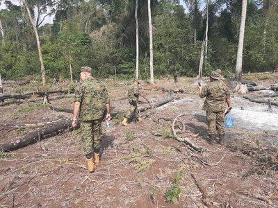 Amambay: Destruyen marihuana y campamentos precarios