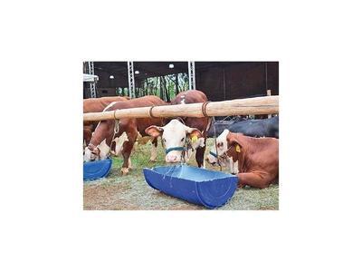 La UE prohibirá antibióticos en ganados desde el 2023