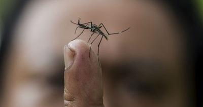 Aumentan notificaciones de dengue y se intensifica trabajo para evitar epidemia en Asunción y Central