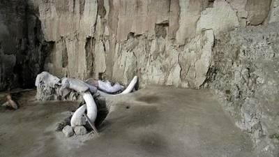 Encontraron restos de 14 mamuts que pueden cambiar la arqueología