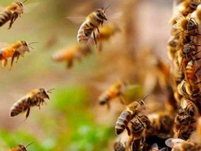 Delincuente se escondió en un yuyal y fue atacado por abejas