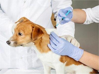 México, primer país libre de rabia humana contagiada por perro