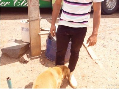 El polémico viaje de un joven y su mascota