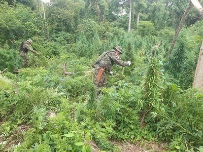 Deforestaban para plantar hectáreas de marihuana en reserva natural