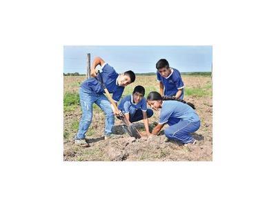 Voluntarios   del Guairá reforestan árboles nativos