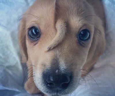 ¡Él es único! La emotiva historia del perrito que nació con una colita en la frente