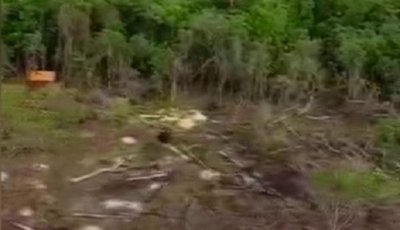 Narcos construyen puentes en reserva natural