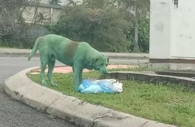 Las impactantes imágenes de un perro pintado de verde, llorando y desesperado en busca de comida