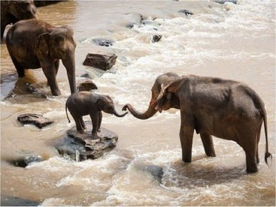 Elefantes serán reubicados por sequía en el Sur de África
