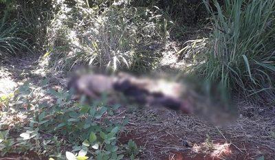 Hallan cadáver a orillas de un bosque en Minga Guazú