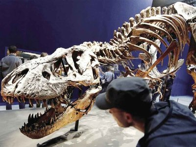 ¿Cómo los dinosaurios soportaron el frío extremo?