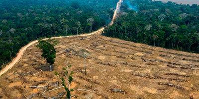 La deforestación en la Amazonía brasileña alcanza el mayor nivel en más de una década