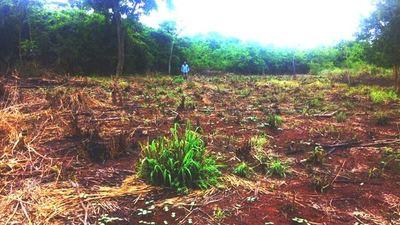 Iniciativa para reforestar: Lanzarán bombas de semillas desde el aire