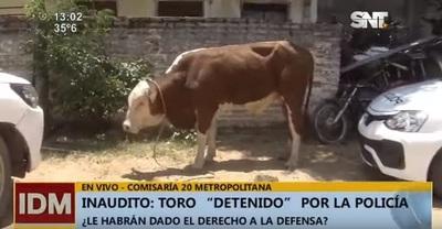 Toro acaba en la comisaría a causa de conflicto