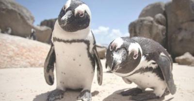 Pingüinos gay son ladrones ra´e