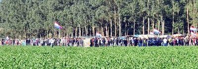 Invasiones frenan inversión forestal, denuncia Fepama