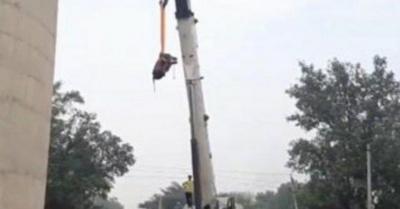 Toro volador fue rescatado con vida