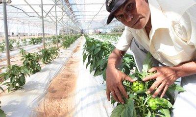 MAG proyecta construir invernaderos para apoyar al sector productivo de Itapúa