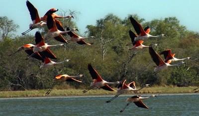 Paraguay será sede del Mundial de observación de aves en el 2022