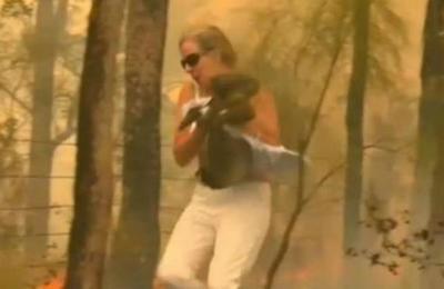 Sacrifican a koala que una mujer salvó de las llamas en Australia