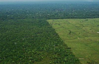 Amnistía Internacional urge a Bolsonaro a frenar ganadería ilegal en Amazonia