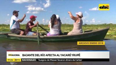Bajante del río afecta al yacaré yrupê