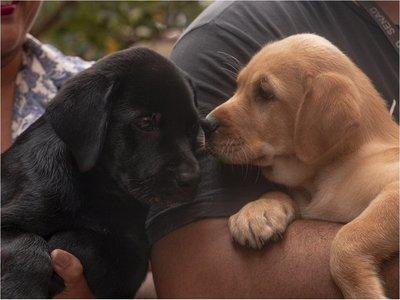 Dos cachorros donados serán adiestrados en la Senad
