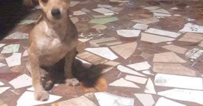 """""""Intruso"""", el perrito adoptado por un barrio"""