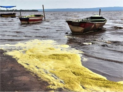Algas tóxicas están de vuelta en zona de Areguá