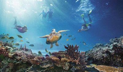 Australia emplea un robot para regenerar la dañada Gran Barrera de coral