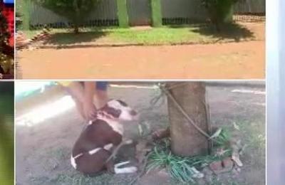 Abuela de 90 años fue atacada por un pitbull en Luque