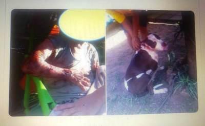 Vecinos y policías salvaron a abuelita atacada por un Pitbull •