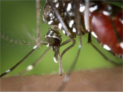 Inicia epidemia de dengue con más de 500 casos sospechosos por semana