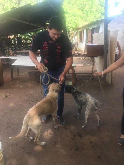 Tras denuncia, Fiscalía rescata a perros con frágil estado de salud