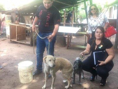 Dos perros son rescatados tras denuncias de maltrato animal