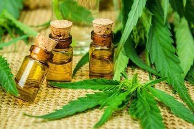 Comisión en Diputados rechaza despenalización del autocultivo del cannabis medicinal