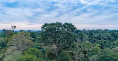 ONG ambiental ' A Todo Pulmón' lanza agenda 2020 junto a tienda de regalos