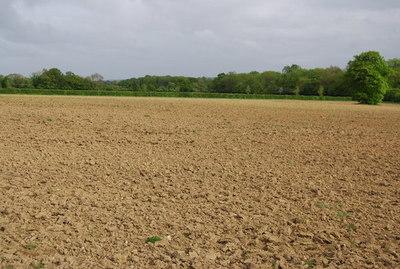 Preparan taller sobre producción sostenible de cultivos en verano