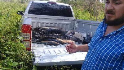 Decomisan pescado fresco en temporada de veda a orillas del Paraná