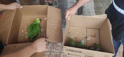 Rescatan a más aves silvestres de mercado de San Lorenzo