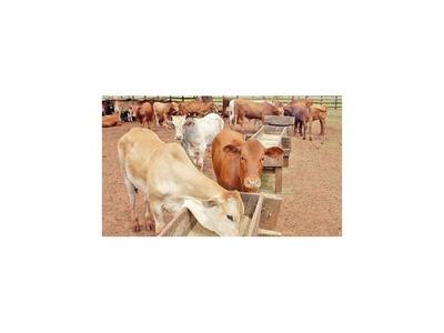 En Brasil pagan hasta 12% más por el ganado para faena