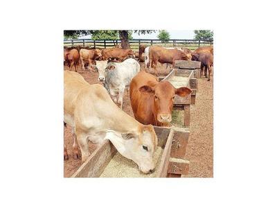 ARP pide  al Senacsa aclarar caso de   carne con  ractopamina enviada a Rusia