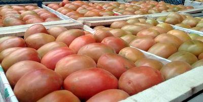 Escasez eleva  precio del tomate y piden importar