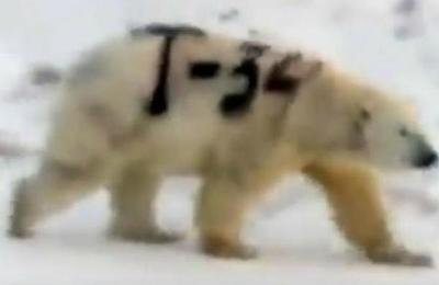 La verdad sobre el oso polar pintado con el nombre de un mítico tanque ruso