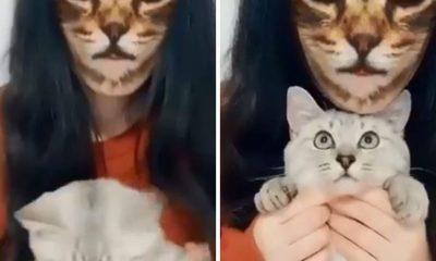 Gatos reaccionan a un filtro y causan furor en las redes