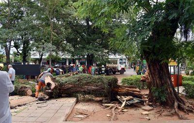 Temporal derriba un árbol y deja sin energía a hospital