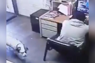 Lo que hace este perrito para estar al lado de su amigo es asombroso